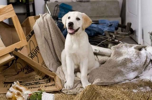 Chien a adopter chaton chien donner - Donner des meubles a une association ...