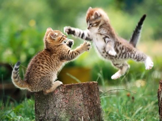 Bebe chat a adopter gratuit chaton chien donner - Un chat gratuit ...