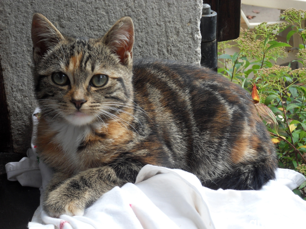 Chat a adopter gratuitement 95