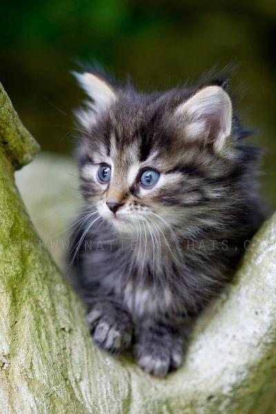 Top Chat mignon a donner - Annonces chatons VA68