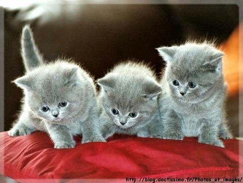 elegant pour que votre chat ait le poil doux et brillant regardez les brosses pas cher ici petit chaton gratuit with chat gratuit - Chat Gratuit