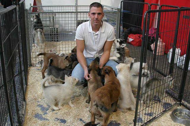 Chaton a vendre gratuit chaton chien donner - Chaton bengal gratuit ...
