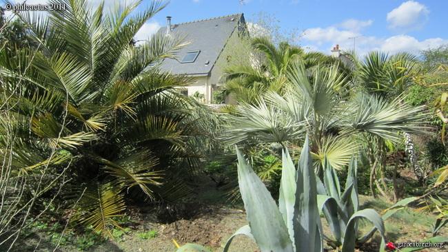 Le forum des fous de palmiers
