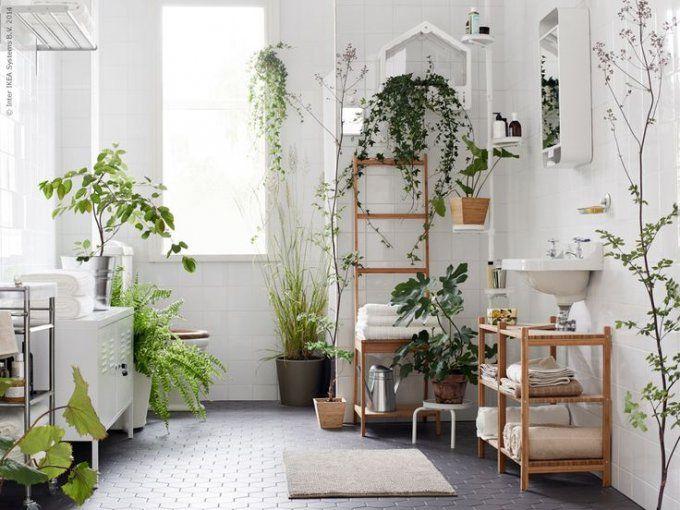 Plante salle de bain sombre